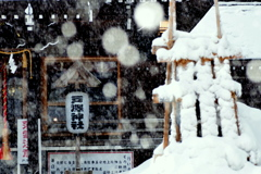 今朝は吹雪でした
