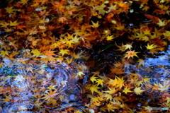 落ち葉がいっぱいの 雨の朝 ②