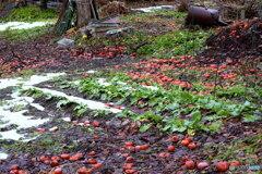 柿のジュータン