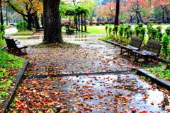雨の朝のお散歩