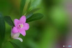 小さなピンクのお花