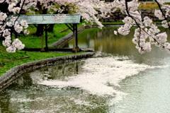 お堀の花筏