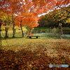 市民の森の紅葉③