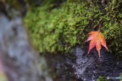 一人ぼっちの秋
