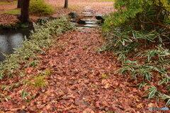 落ち葉とクマザサのある、 雨の散歩道