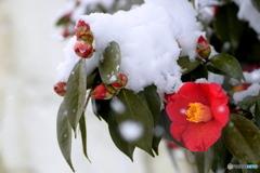 今朝は雪が降りました