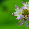 道端の小さな草花