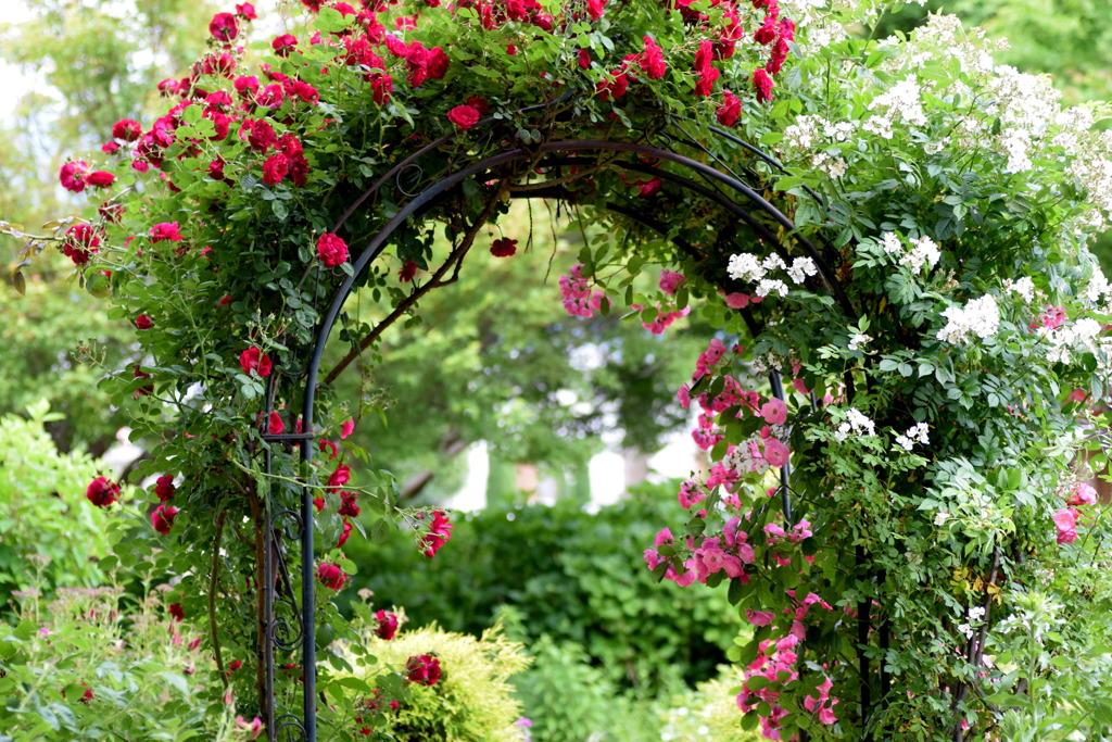薔薇のアーチ ①