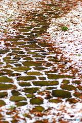落ち葉と雪の 散歩道