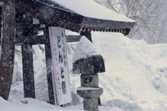 今朝も雪でした