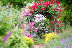 薔薇のアーチ  ②