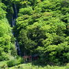 白糸の滝と新緑