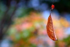 秋の空中ブランコ