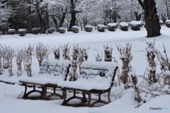 今朝は雪が積もってくれました