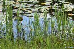 ひょうたん池に映った青空