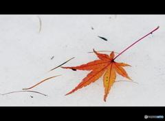 雪の上の落ち葉