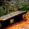 ひょうたん池のベンチ