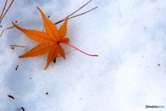 雪の上に落ち葉