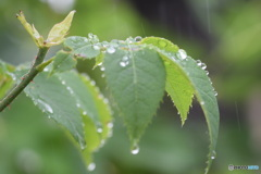 雨の日が好き