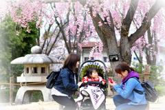 桜の下で みんなニコニコ