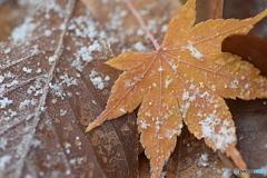 秋から冬へ  ②