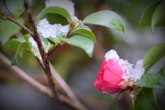 今朝は雪でした