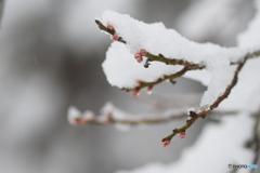 春よ来い、早く来い