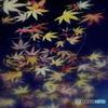 心字池の落ち葉