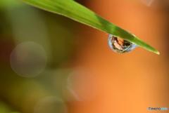 朝露と 落ち葉