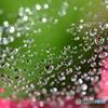 今朝の水滴