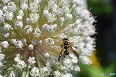 ハチさんが遊びに来てくれました