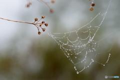 蜘蛛の糸 大好き^^