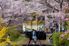旧安野駅の春