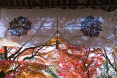 秋晴れの永観堂
