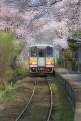 三浦駅の桜