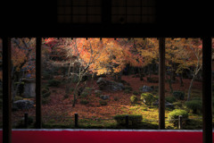 散りゆく紅葉