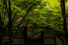 常寂光寺の緑