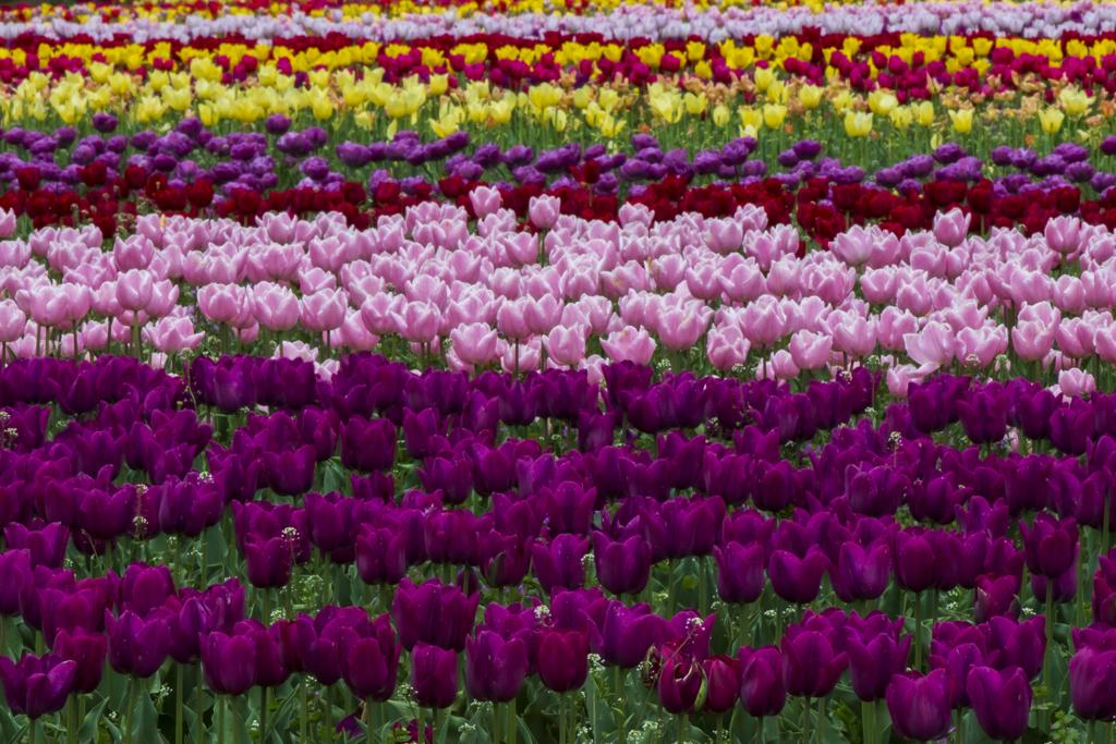 春color