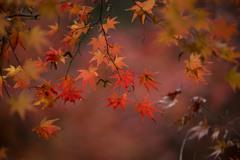 晩秋の旅立ち