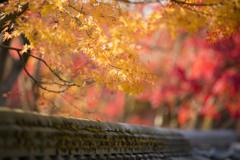 晩秋の禅林寺