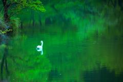 新緑が映る湖