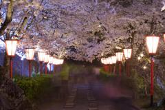 鶴山公園の夜桜