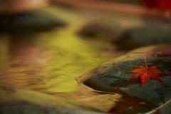 秋色の手水舎