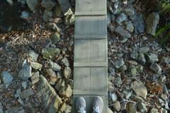 枯れた湿原にかかる、踏み板。