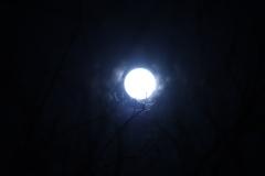 夜曲(2)