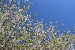 春、満喫中。