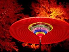 紅葉と野点傘
