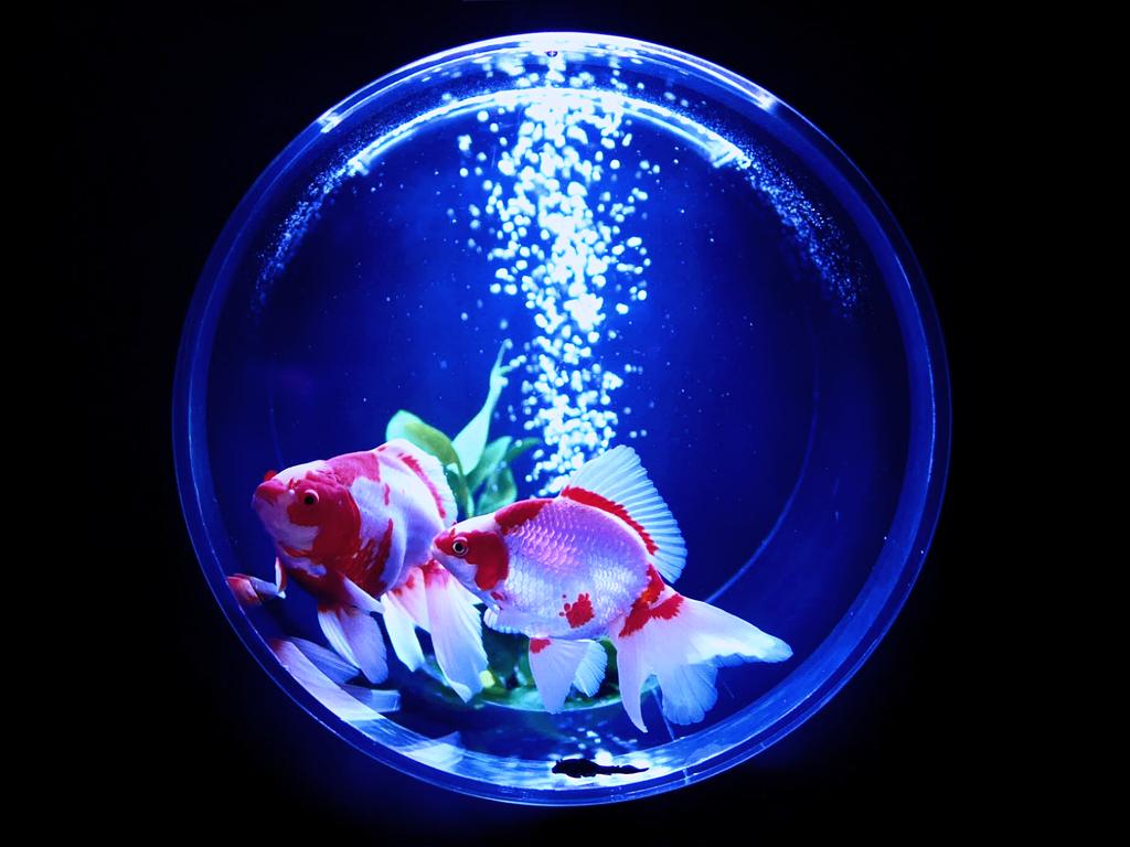 アートアクアリウム 金魚 By Ran2 Id 写真共有サイト Photohito