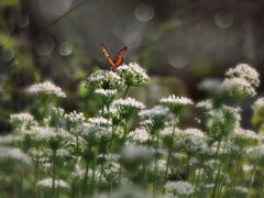韮の花畑 t