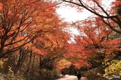 神戸市立森林植物園 Ⅵ
